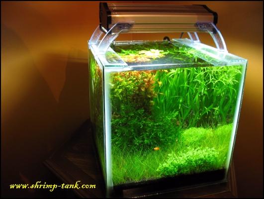 shrimp-tank-shrimp-cube-full-view