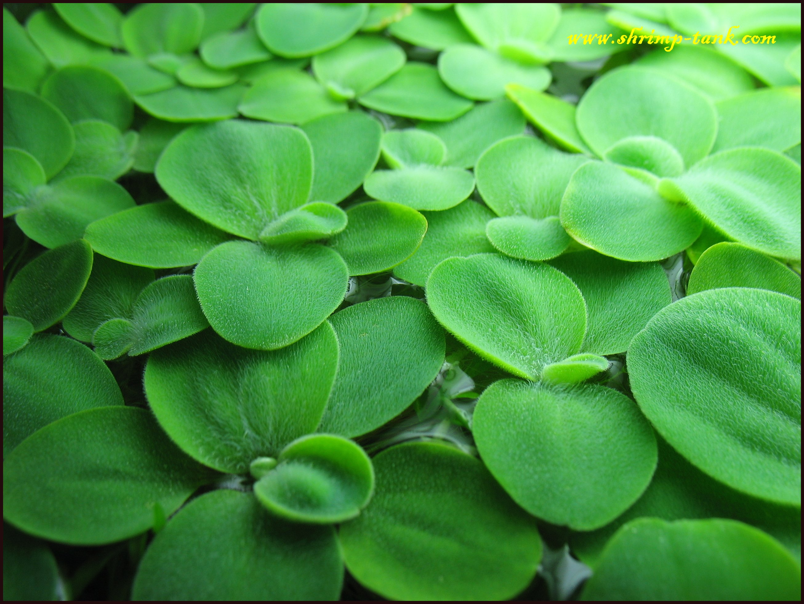 Floating water plants images for Waterside plants