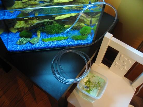 Shrimp-Tank.com Shrimp acclimatization.