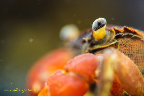 Crab eye in the focus