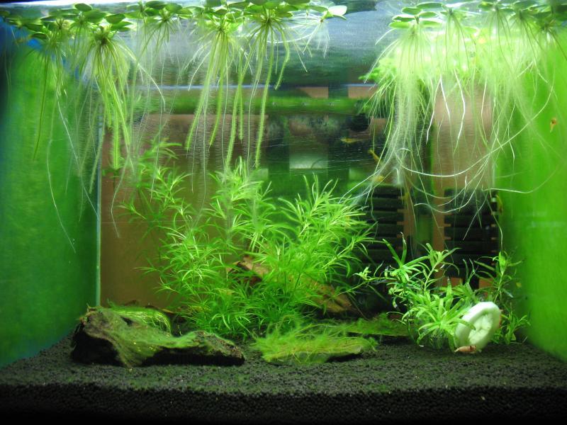 green shrimp tank shrimp tank. Black Bedroom Furniture Sets. Home Design Ideas